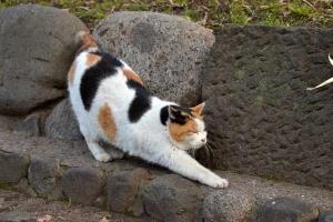 Sakura Cat Sakura-chan Stretching