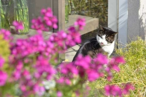 Cat and Spring Pink Flowers