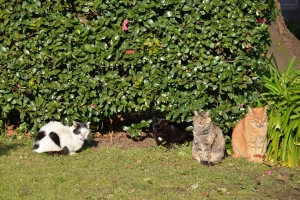 Cats in Group Photo Session (1/6)