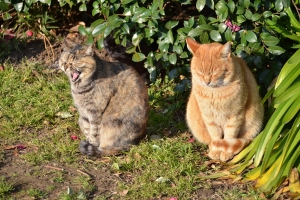 Cats in Group Photo Session (3/6)