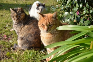 Cats in Group Photo Session (4/6)