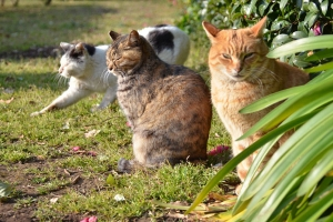 Cats in Group Photo Session (5/6)