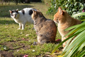 Cats in Group Photo Session (6/6)