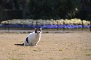 Cat On Winter Grass