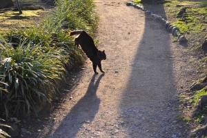 Cat Landing Shadow