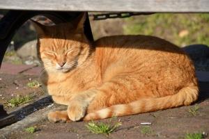 Ginger Cat Under Bench