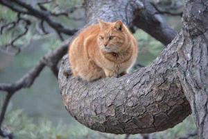 Cat in Pine Tree