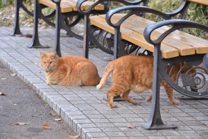 Ai-chan The Cat (behind bench) and His Brother