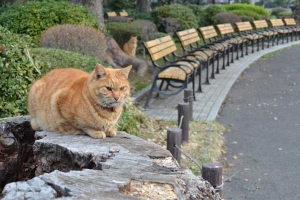 Ai-chan The Cat (behind bench) and His Brother on Tree Stump