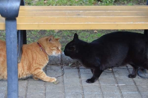 Ai-chan The Cat and Black Cat Greeting