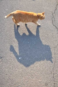 Ai-chan The Cat and His Shadow
