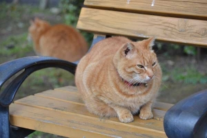 Ai-chan The Cat (on bench) and His Brother