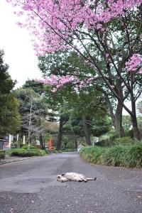 桜猫 Yoko Sakura Cat