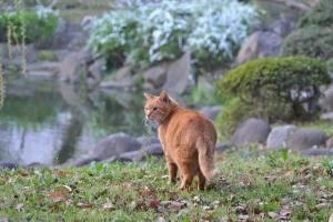 Ai-chan The Cat and Yukiyanagi / Thunberg's Meadowsweet