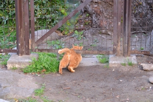 Ai-chan The Cat Crawls Under Fence