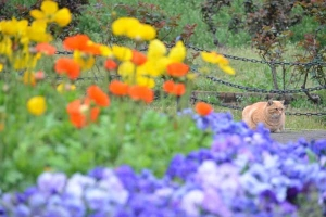 Cat and Spring Flowers