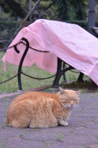 Cat and Pink Tarp