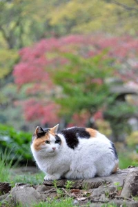 Sakura-chan The Cat and Nomura Kaede Maple