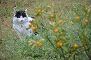 Cat In The Spring Flower Garden