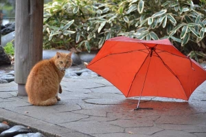 Cat and Umbrella