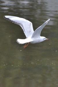 A White Bird