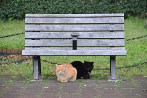 Cat Duo Under Bench