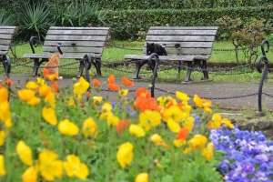 Benches, Cata and Flowers