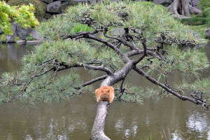 Cat Sitting On Tree