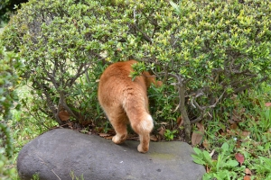 Cat Going Into Bush