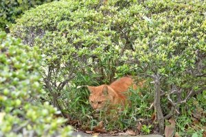 Cat in Bush