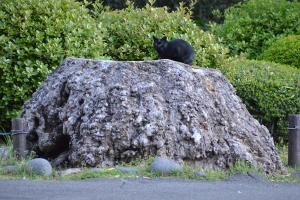 Cat On Tree Stump