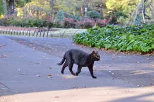 Black Cat Walking Fast