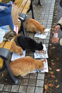 Cats at Breakfast (Ai-chan, far right)