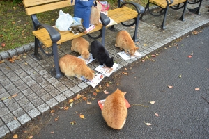 Cats at Breakfast (Ai-chan, top)