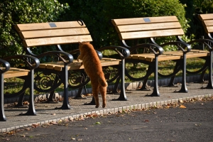 Cat (Ai-chan's Brother) Getting On Bench