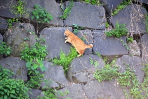 Cat (Ai-chan's Brother) In Search of Ai-chan