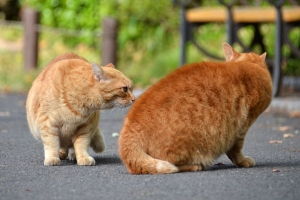 Cats Face Off