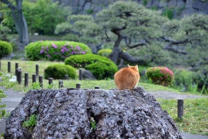 Cat (Ai-chan's Brother) On Tree Stump