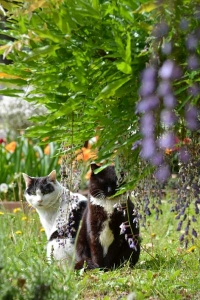 Cats and Flowers (Wisteria)