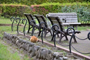 Cat Behind The Benches