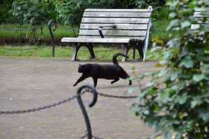 Cat and Park Bench