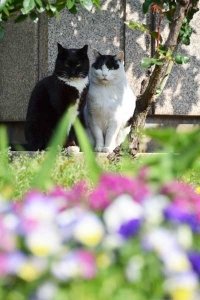 Cat Duo and Flowers