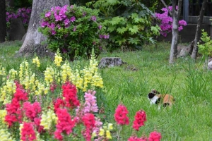 Cat and Flowers (Snapdragon and Azalea)