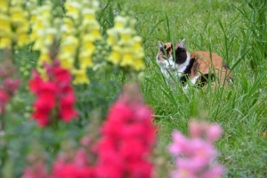 Cat and Flowers (Snapdragon)