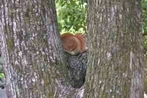 Cat Sitting On a Bough of Kusunoki Tree