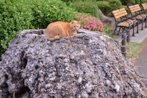 Tree Stump Cat and Flowers (Azalea)