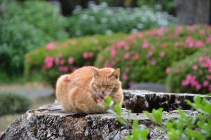 Tree Stump Cat and Flowers (Azalea/Hydrangea)