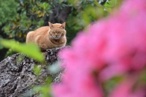 Tree Stump Cat and Flowers (Azalea)