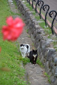 Cat Duo In The Flower Garden