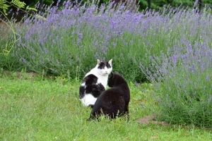 Cat Duo and Flowers (Lavender)